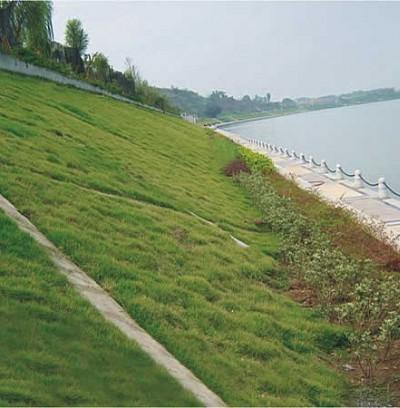 无砂混凝土生态植生护坡,植被砼护坡