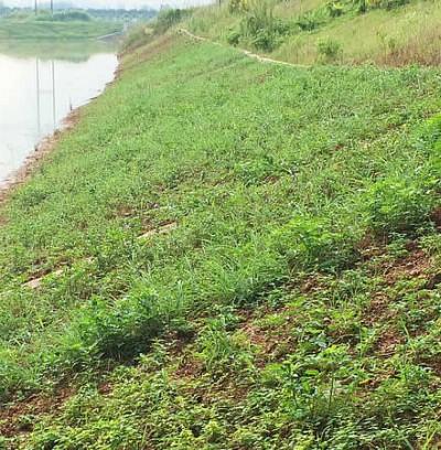 广西来宾植生砼护坡案例
