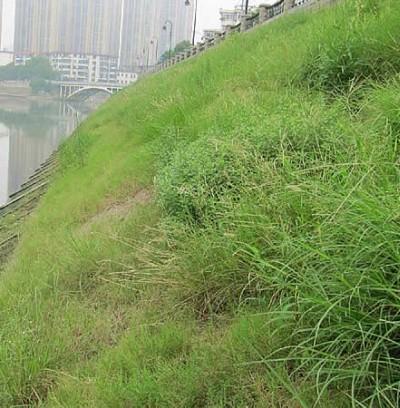 植生生态混凝土护坡
